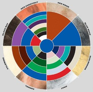 using a color wheel can help put your look together when you are doing dressage or show ring driving