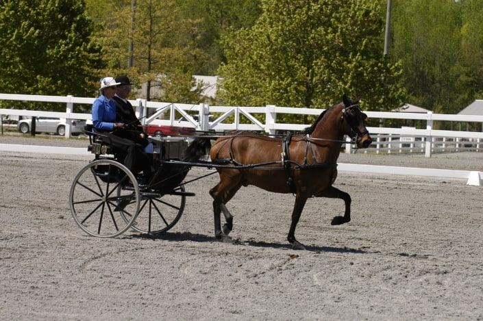 Daniel Dawson with Eileen driving down the centerline the last movement for the FEI test in New Jersey